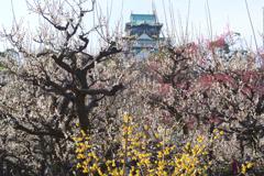 大阪城梅林景色(3)