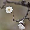 春よ早く来い(4)