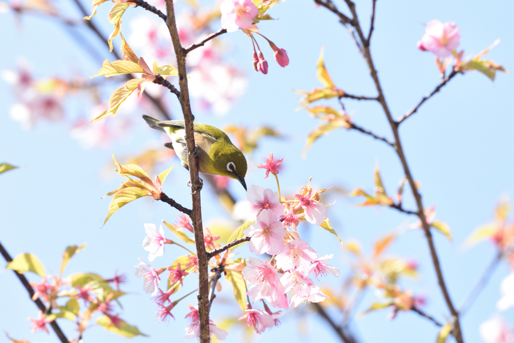 蜜を求めて(1)