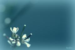 直径1ミリくらいの小ちゃなお花