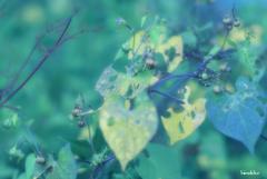 虫食い葉っぱアート