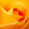 オレンジシャーベット♪