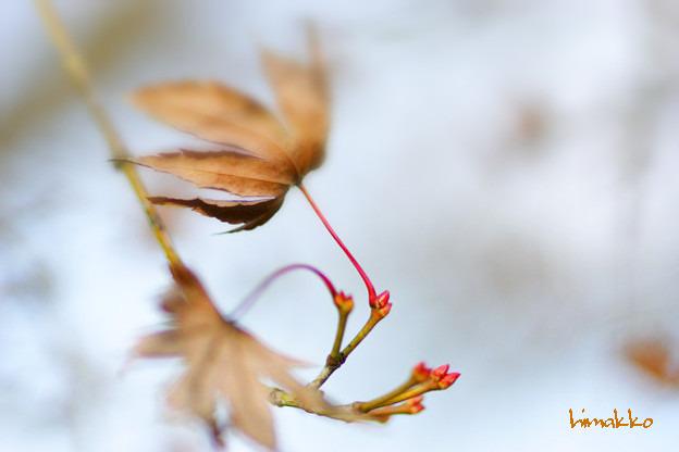 朽ちて芽吹いて小ちゃな赤い芽一つ二つ