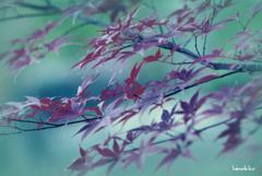 しっとりと紫紅葉