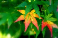 一枚半の紅葉