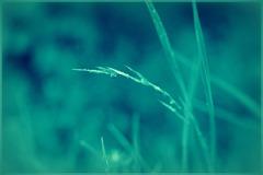 雨の日の雑草