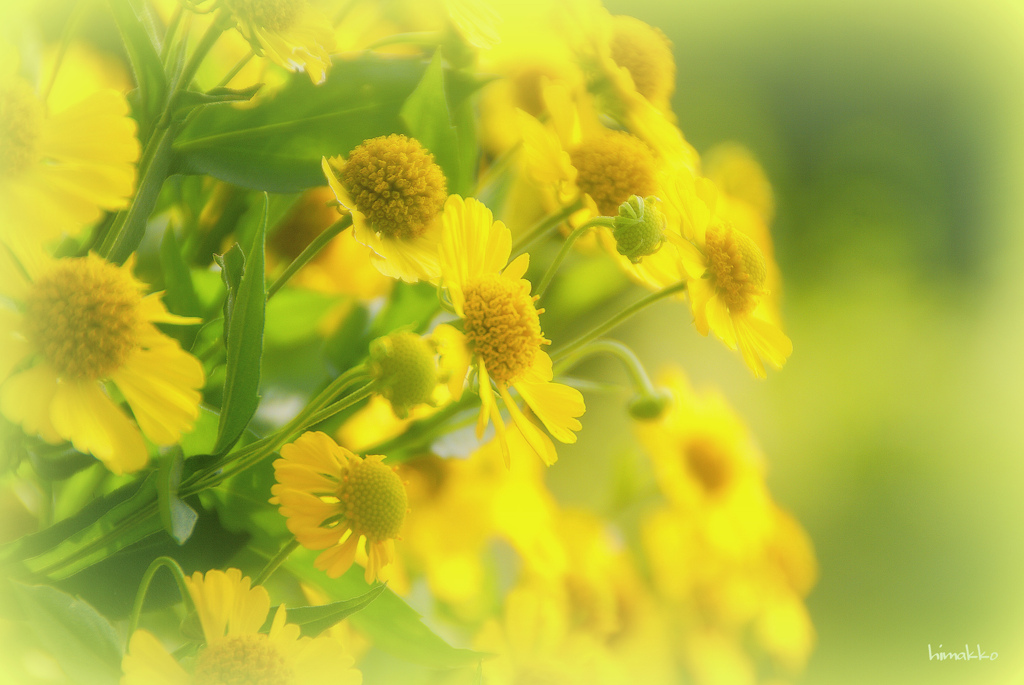 まだまだ夏夏色黄色~♪