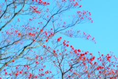 赤いお花のような木の実