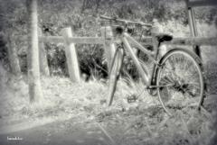 自転車写真に憧れて