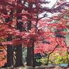 殿ヶ谷戸庭園・紅葉