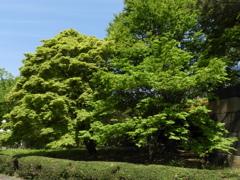 皇居東御苑3