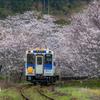松浦鉄道 桜のトンネル 3
