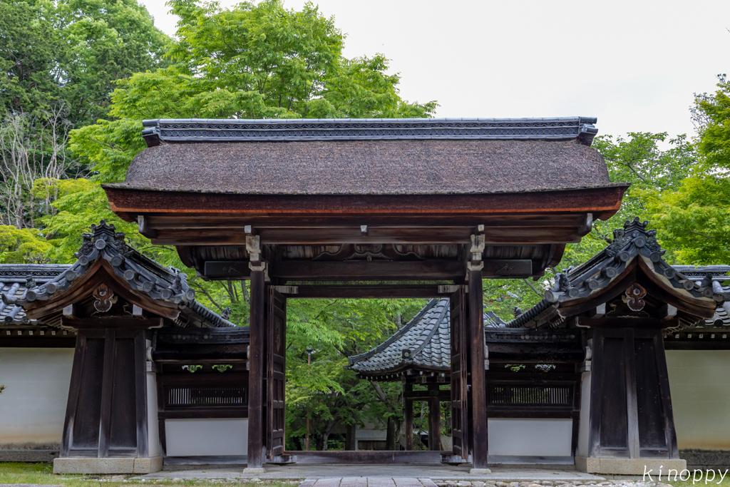 西教寺 新緑 3