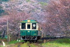 松浦鉄道 桜トンネル 2