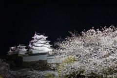 姫路城 和傘幻想 華灯り 11