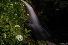 見返りの滝 ホタル 3