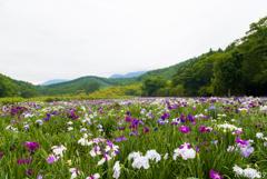 神楽女湖花しょうぶ園