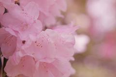 石楠花・1_2