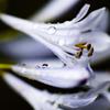 梅雨の花・3