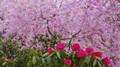 石楠花・19_5