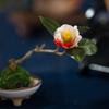 アート盆栽( つばき・3)