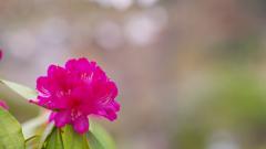石楠花・19_9