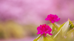 石楠花・19_7