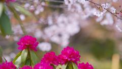 石楠花・19_10