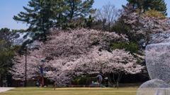 ときわ公園の春・21