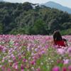 秋 桜・1_6