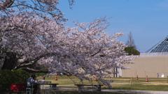 ときわ公園の春・20