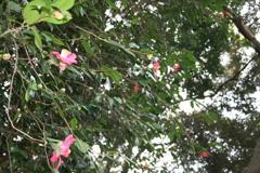 公園に咲く花(撮影:井野上一良)