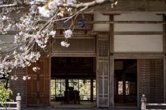 桜の花が散る前に5