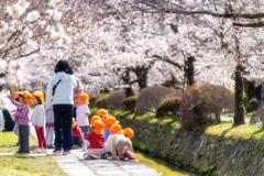 桜の季節がやってきた7