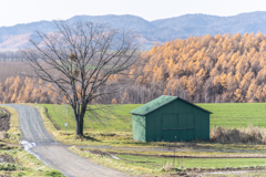 秋の終わり冬の始まり2