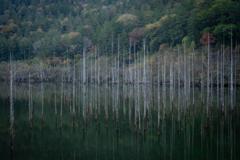 立ち枯れの木1