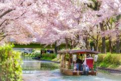 桜の季節がやってきた12