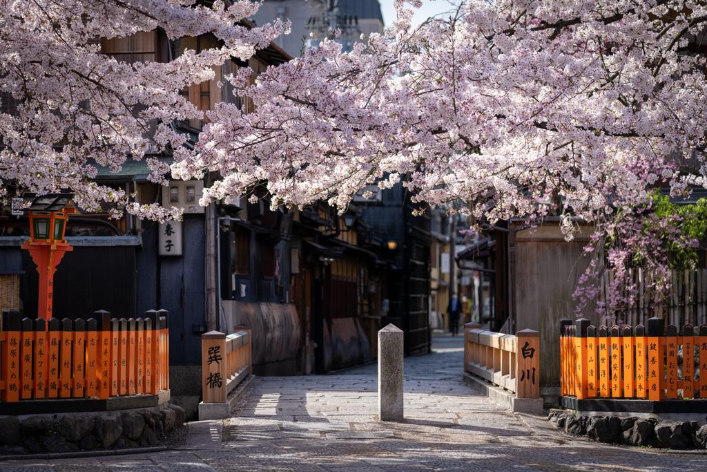 桜の季節がやってきた10