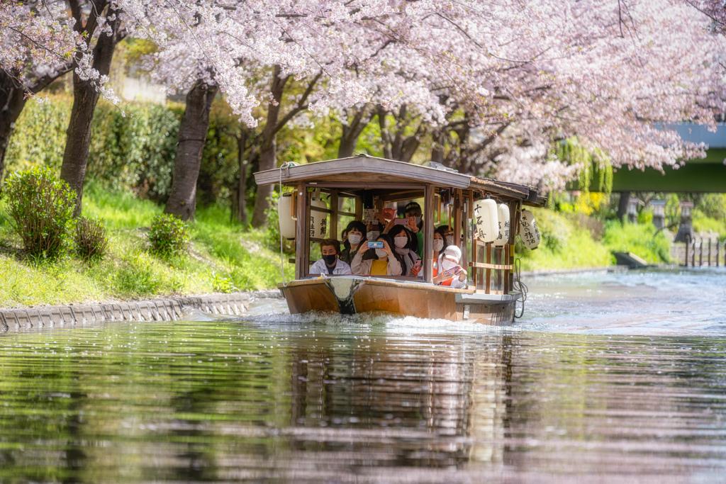 桜の季節がやってきた11