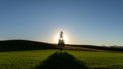秋のツリー2