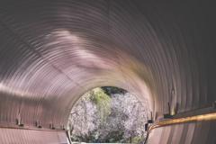 桜色のトンネル1