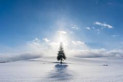雪原のツリー1