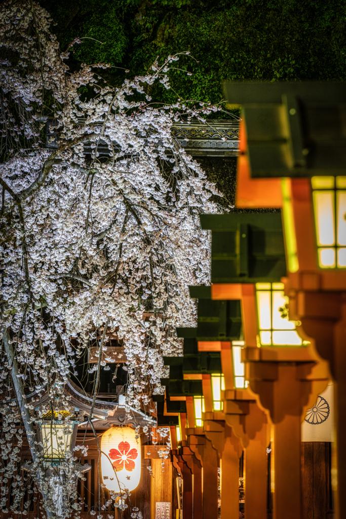 夜の平野神社1