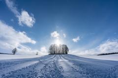 踏み荒らされた雪原で