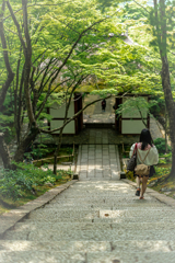 緑の常寂光寺2