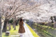 桜の季節がやってきた6