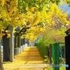 並木の歩道