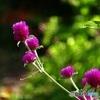 小さいお花♪