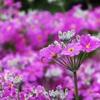 可愛いお花♪