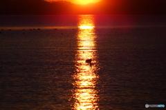 松島の朝陽2